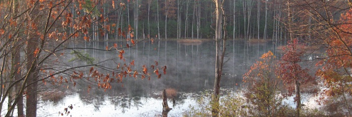 autumn beaver pond with fog and red leaves