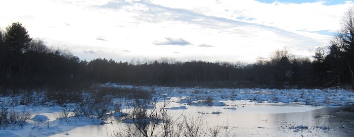 snowy winter marsh